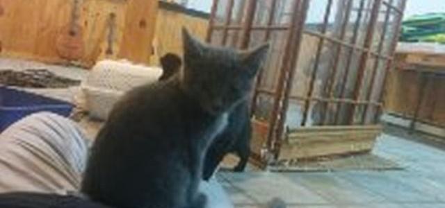kitten2-640x300