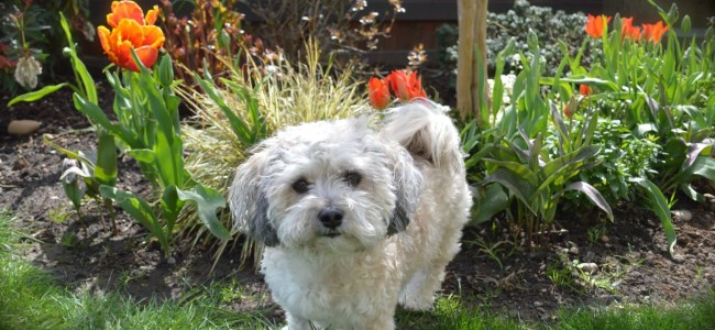 1-Portland-Landscaping-Pet-Friendly-Plants-Lola