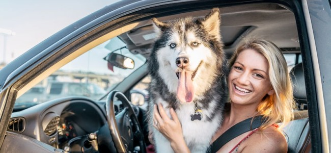 48357210 - beautiful girl and husky sitting in a car and looking at camera - funny dog with owner in a car