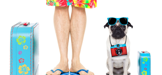 56451590 - pug dog and owner ready to go on summer holidays vacation with luggage and bags , isolated on white background
